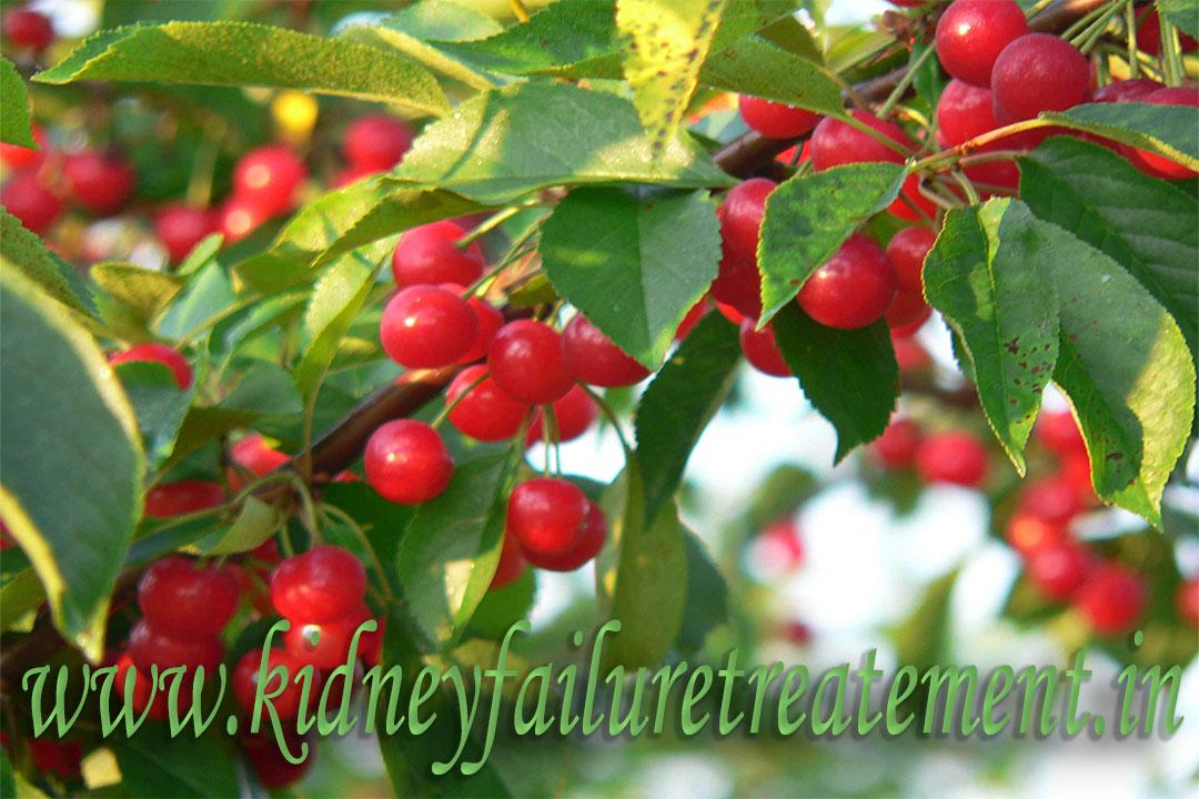 cherries and kidney disease