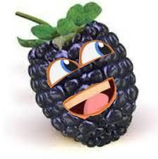 blackberry cure kidney
