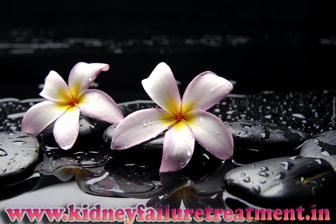 Kidneys Fail Completely