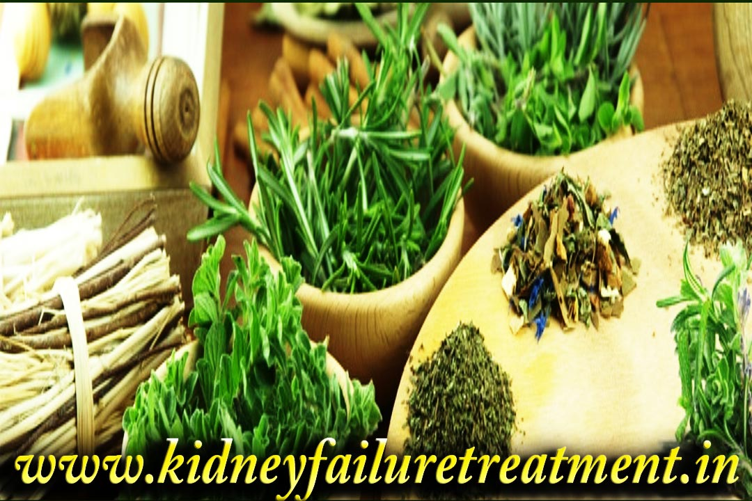Ayurvedic Doctors For Kidney Failure Treatment