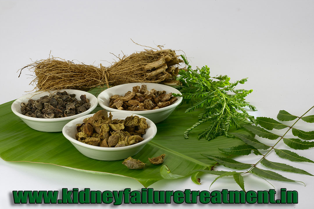 Ayurvedic Doctor For Kidney Failure Treatment In Rajasthan