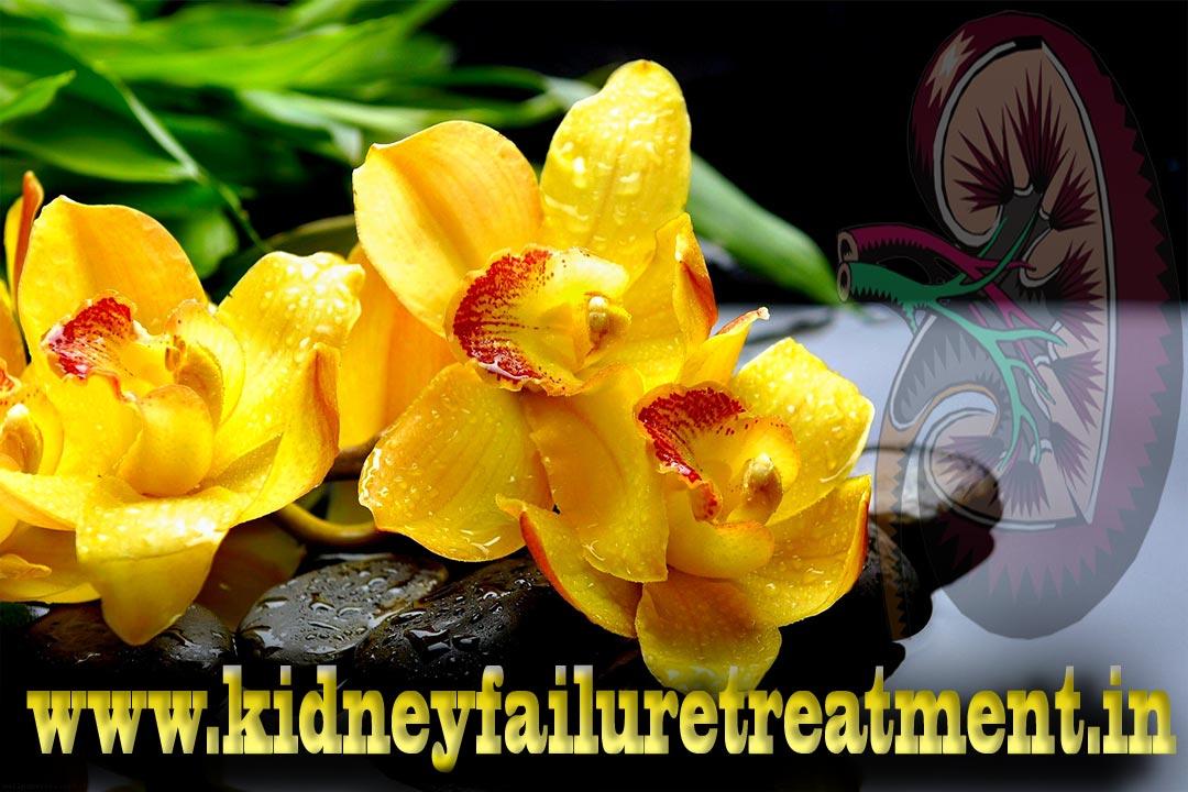 Chronic pyelonephritis Treatment
