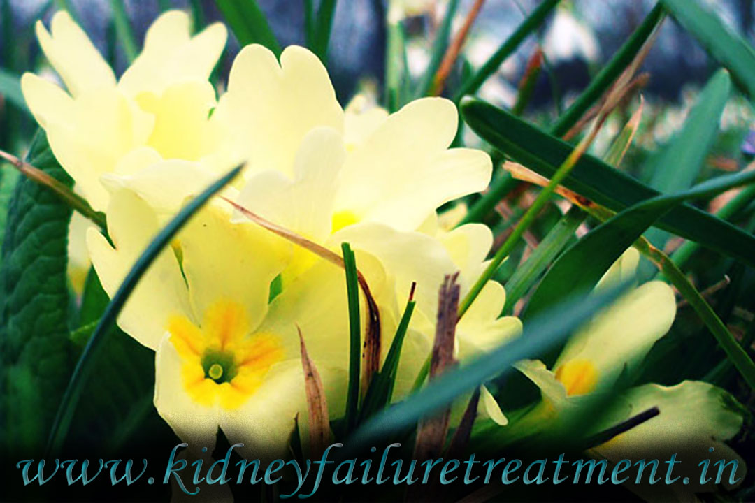 Kidney Failure Treatment Japan